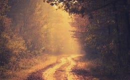 美丽的金黄森林每秋天天 库存照片