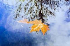 美丽的金黄叶子在秋天 免版税库存照片