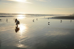 美丽的金黄海滩的女孩 库存图片