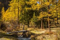 美丽的金黄秋天森林 库存图片