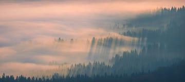 美丽的金黄薄雾 库存照片