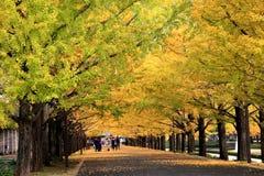 美丽的银杏树大道在东京 免版税库存照片