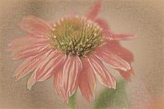 美丽的锥体花如同说明 库存照片