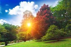 美丽的阳光公园 免版税库存图片