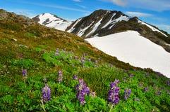 美丽的阿拉斯加的山和风景夏令时 免版税库存照片