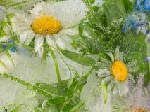 美丽的雏菊的抽象 免版税库存照片