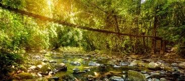 美丽的雨林和长的吊桥风景视图在太阳的发出光线, Khao Sok国家公园,泰国 免版税图库摄影