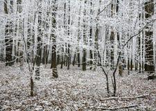 美丽的雪树在秋天森林里 免版税库存照片