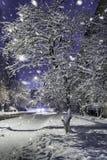 美丽的雪树 库存照片