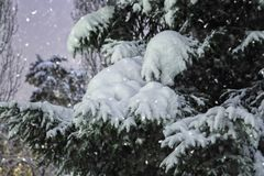 美丽的雪树 免版税库存图片