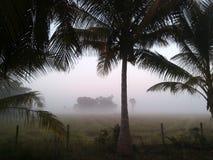 美丽的雾 免版税库存照片