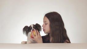 美丽的青少年的女孩和狗大陆玩具西班牙猎狗吃在白色背景股票的Papillon鲜美新鲜的红色苹果 股票录像