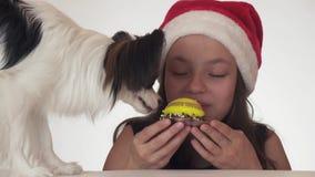 美丽的青少年的女孩在圣诞老人帽子和狗大陆玩具西班牙猎狗与胃口和乐趣吃a的Papillon 股票录像