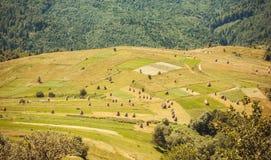 美丽的青山的干草堆有森林背景 喀尔巴阡山脉和地方农场风景在夏天 库存图片
