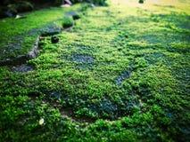 美丽的青苔和地衣盖了石头 库存照片