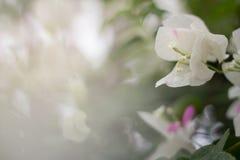 美丽的非常花纸照片 图库摄影