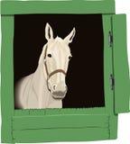 美丽的颜色图画马 免版税库存照片