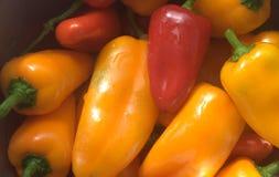 美丽的颜色胡椒 免版税库存照片