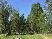 美丽的风景森林坎卢普斯足迹 免版税库存图片