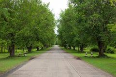 美丽的风景路在森林里 免版税库存图片