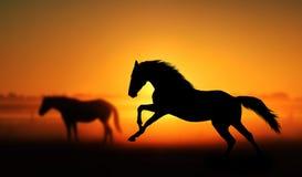 美丽的马剪影在日出背景的  库存图片
