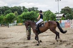 美丽的马和jokey在行动在跑马轨道用障碍设备在竞技场 库存图片