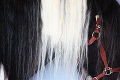 美丽的马鬃毛 库存图片