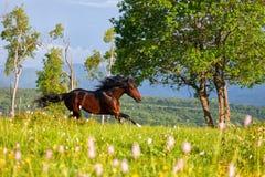 美丽的马 库存图片