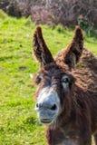 美丽的驴在好日子 免版税库存图片