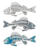 美丽的鱼例证概要 免版税库存图片