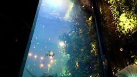 美丽的鱼oceanarium 一点鲨鱼游泳在水中 股票视频