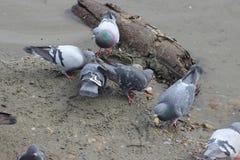 美丽的鸟在海滩的早期的春天 免版税库存图片