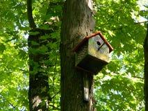 美丽的鸟饲养者在早晨森林里 库存照片