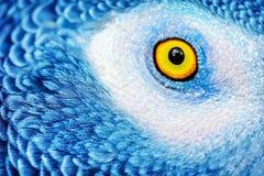美丽的鹦鹉眼睛 库存图片