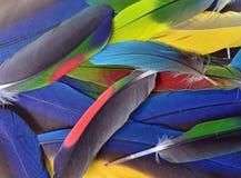 美丽的鹦鹉羽毛 图库摄影