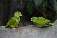 美丽的鹦鹉鸟 图库摄影