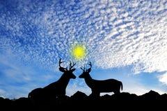 美丽的鹿 图库摄影