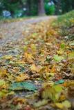 美丽的黄色和棕色叶子在地面上说谎在公园 免版税库存照片
