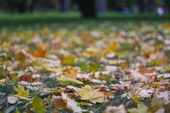 美丽的黄色和棕色叶子在地面上说谎在公园 免版税库存图片