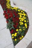 美丽的黄色和红色春天培养花床 免版税库存图片