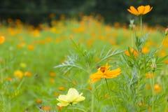 美丽的黄色花园 免版税库存照片