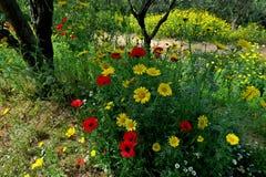 美丽的黄色雏菊和红色鸦片在森林特写镜头 免版税库存图片