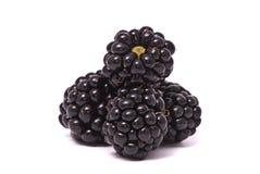 美丽的黑莓 库存照片