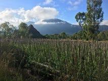 美丽的登上Batur火山农场土地在巴厘岛,印度尼西亚 免版税库存图片