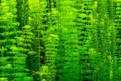 美丽的水下的植物 免版税库存图片
