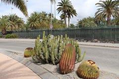 美丽的仙人掌庭院和路在Maspalomas,大加那利岛,西班牙 免版税图库摄影