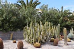 美丽的仙人掌庭院在Maspalomas,大加那利岛,西班牙 库存照片