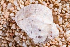 美丽的贝壳宏观射击  免版税库存照片