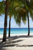 美丽的离开的热带棕榈滩在马尔代夫 免版税库存图片