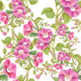美丽的水彩夏天庭院开花的花无缝的样式 免版税库存照片